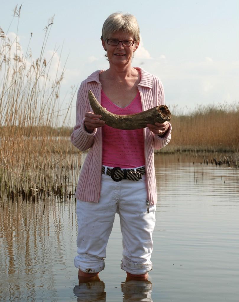 Lisbeth Pedersen (Historieudvikler) bruger ofte spor i landskaber og ting fra museers samlinger i sin forskning. Her står hun med fødderne solidt plantet i Tissø og viser hornstejlen fra en urokse, der blev ofret i søen omkring 600 e.Kr.